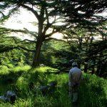 Cedars - Besharre - Qozhaya Valley (Qadisha)