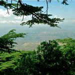 The Shouf Cedars Forest – Hiking
