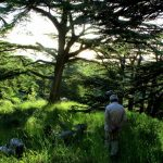Cedars Forest Hiking 7D/6N