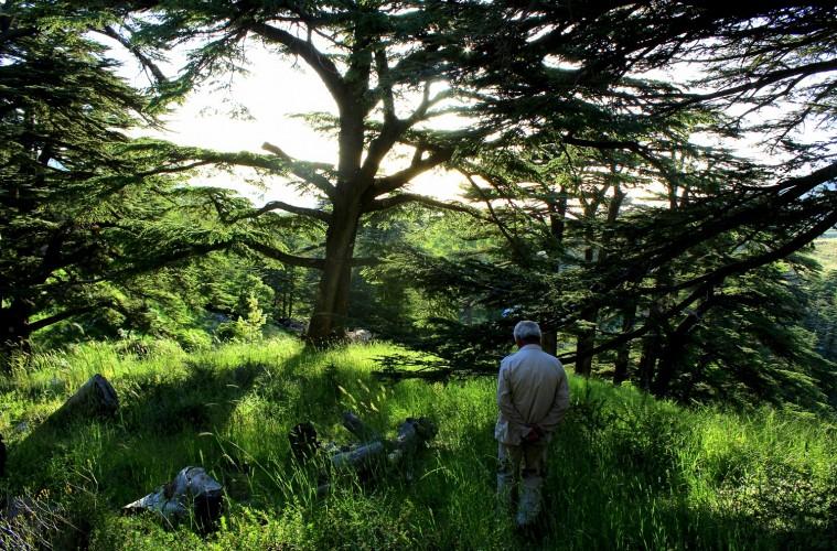 Cedars Forest Hiking 7D/6N