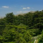 Tannourine Cedars Natural Park – Hiking