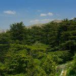 Tannourine Cedars Natural Park – Hiking